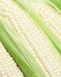 菜根園-奶白糯玉米種子100粒裝