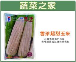 【蔬菜之家】G85.雪珍超甜玉米(純白色)種子20顆(果皮薄嫩,口感脆甜,含有清淡微微奶香,除烹調外也適合生食或打汁)