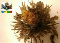 【A好茶】人間普洱『龍珠茶/工藝花茶=每標1顆=』(生茶沱G008)