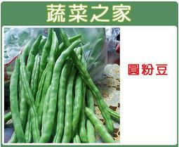 【蔬菜之家】E06.圓粉豆種子60顆(又稱醜豆.壞豆,白花,豆莢略呈圓形,肉厚,柔軟,豆莢易凹凸變形)