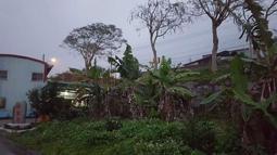 林家厝-自己種的香蕉!特色蘋果蕉,台中蕉(沒有硬心)無毒!自然生長!有機的!
