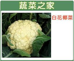 【蔬菜之家】B03.白花椰菜 種子50顆(白色花蕊.花蕊大.口感佳)