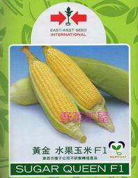 【野菜部屋~大包裝】N05 黃金水果玉米種子一磅裝(約3650顆種子) , 果穗比一般的大 , 甜度高 , 品質棒~