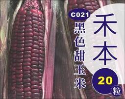 農業屋 C021 黑色甜玉米 ,種子20粒10元