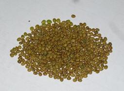 S-028狗尾草(已去殼)種子250顆30元。別名:九尾草、通天草。藥膳植物。